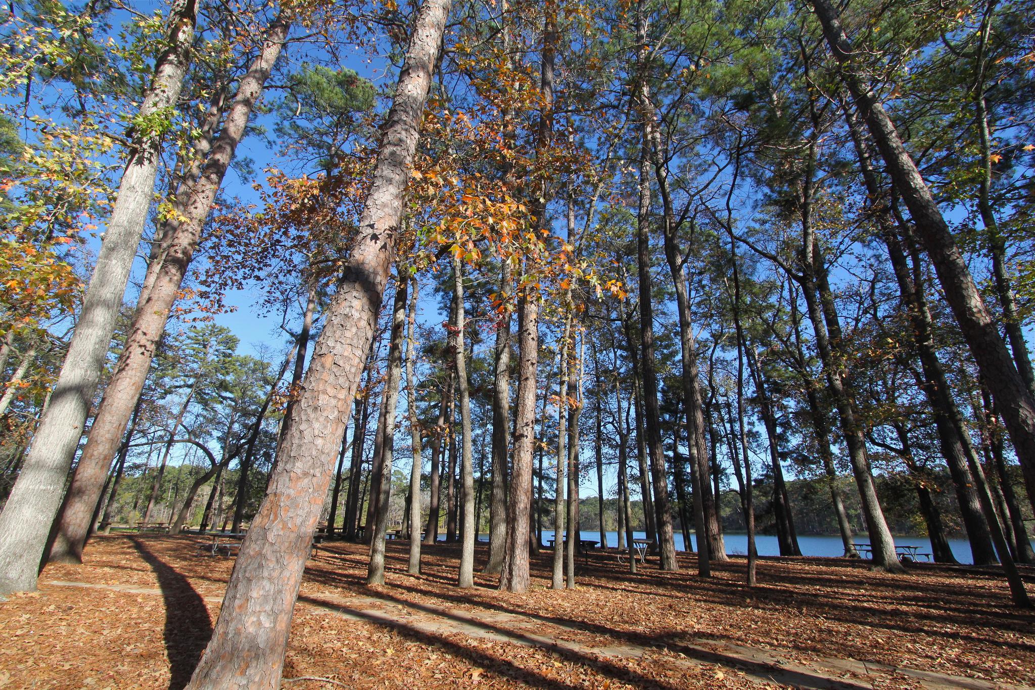 LSHT - 02 - Piney Woods, Huntsville State Park   Plan & Go ...